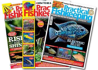 practical fishkeeping magazines